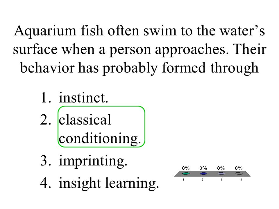 Aquarium fish often swim to the water's surface when a person approaches. Their behavior has probably formed through