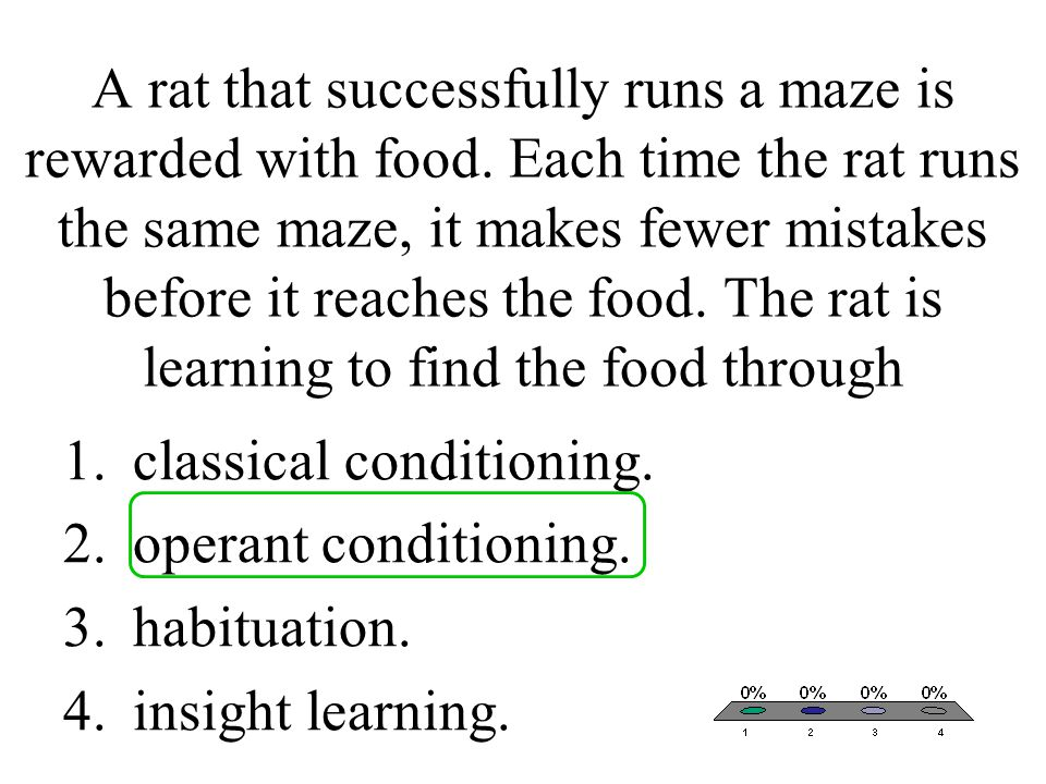 A rat that successfully runs a maze is rewarded with food