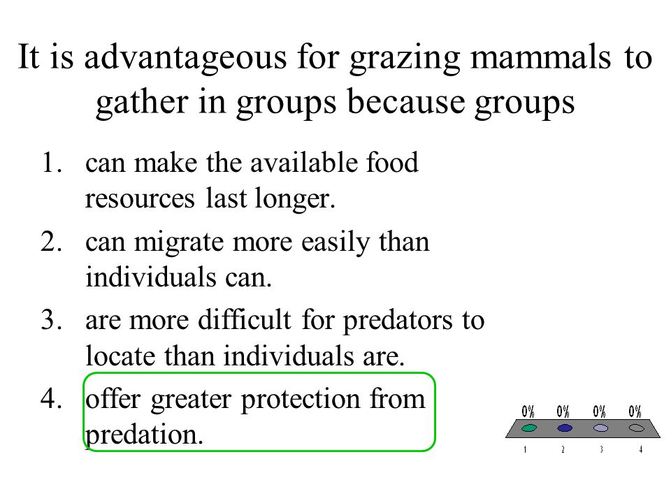 It is advantageous for grazing mammals to gather in groups because groups