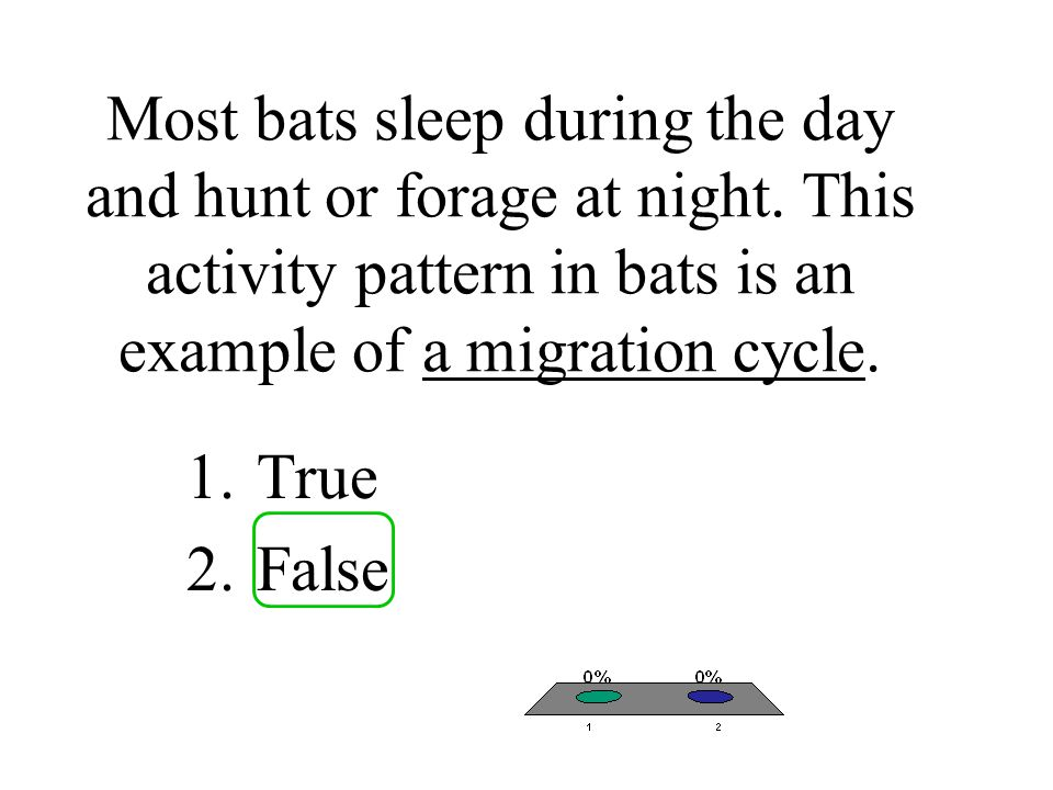 Most bats sleep during the day and hunt or forage at night