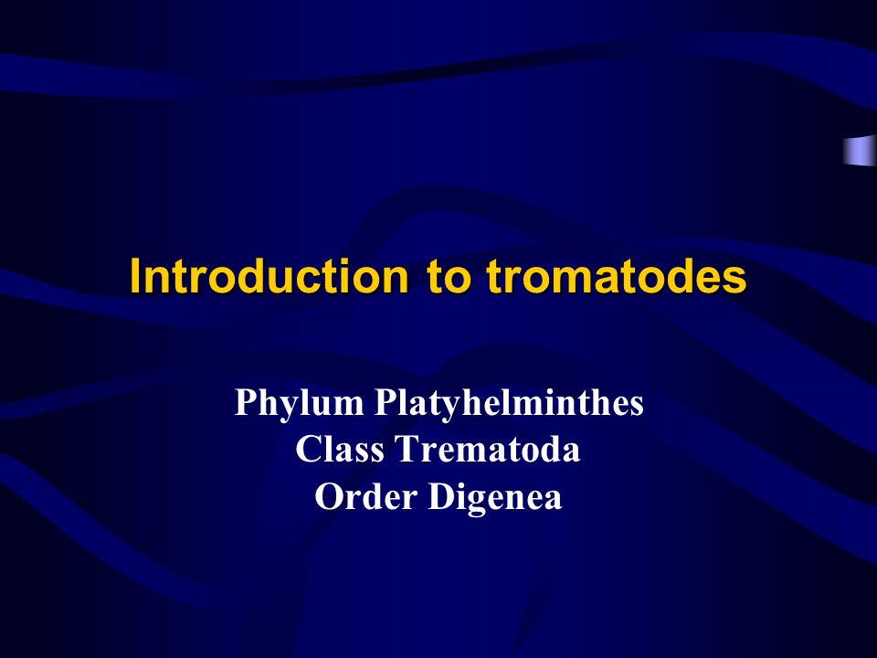 Introduction to tromatodes