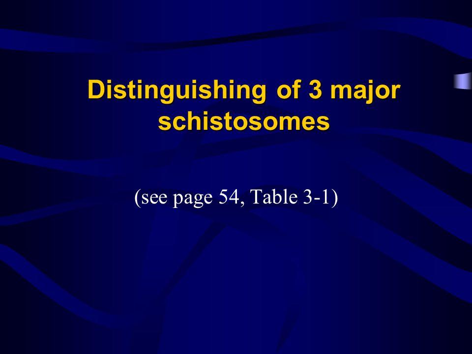 Distinguishing of 3 major schistosomes