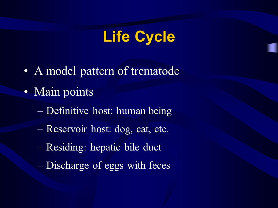 Life Cycle A model pattern of trematode Main points