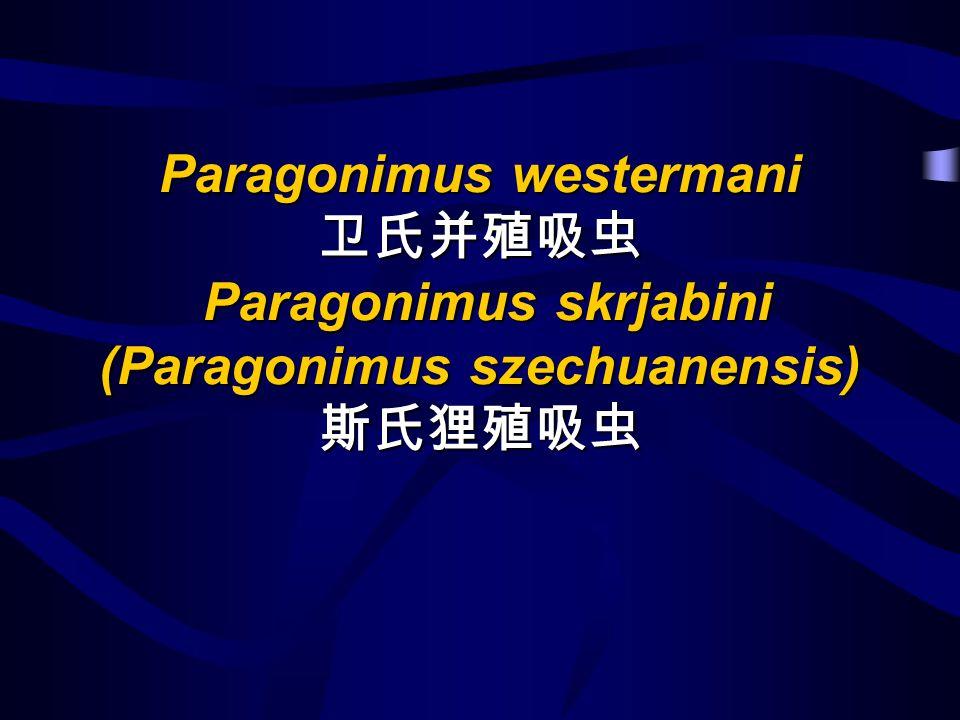 Paragonimus westermani 卫氏并殖吸虫 Paragonimus skrjabini (Paragonimus szechuanensis) 斯氏狸殖吸虫