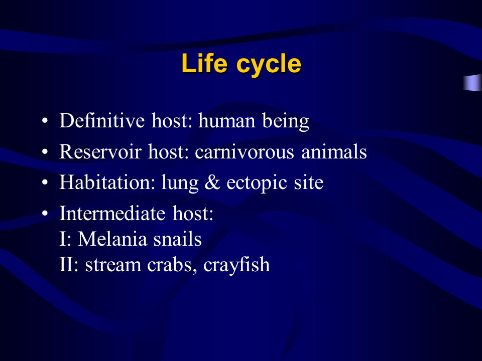 Life cycle Definitive host: human being