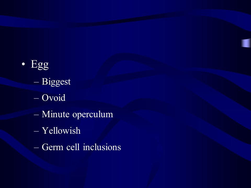 Egg Biggest Ovoid Minute operculum Yellowish Germ cell inclusions