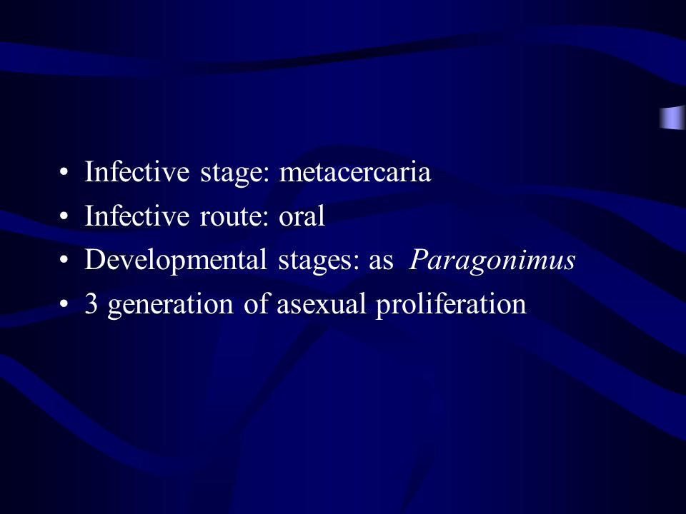 Infective stage: metacercaria