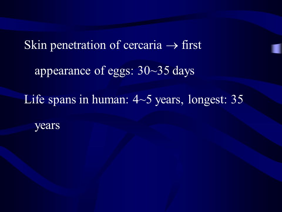 Skin penetration of cercaria  first appearance of eggs: 30~35 days