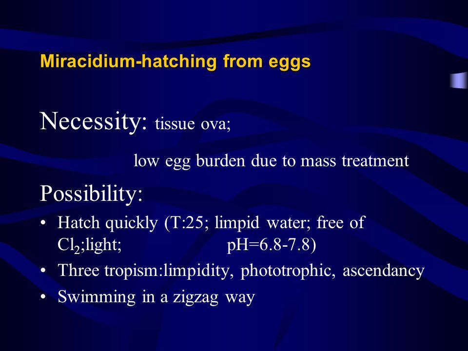 Miracidium-hatching from eggs