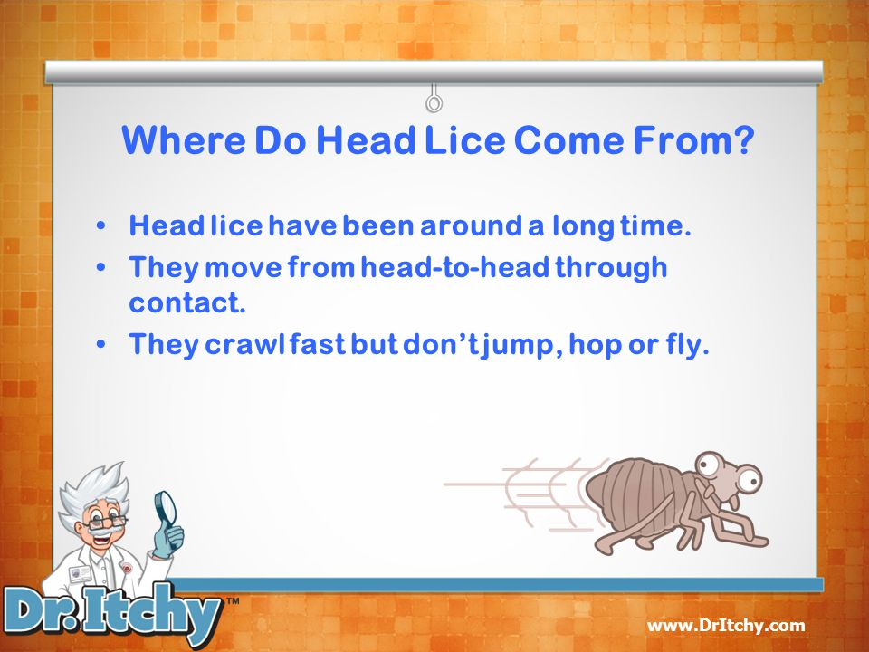 Where Do Head Lice Come From