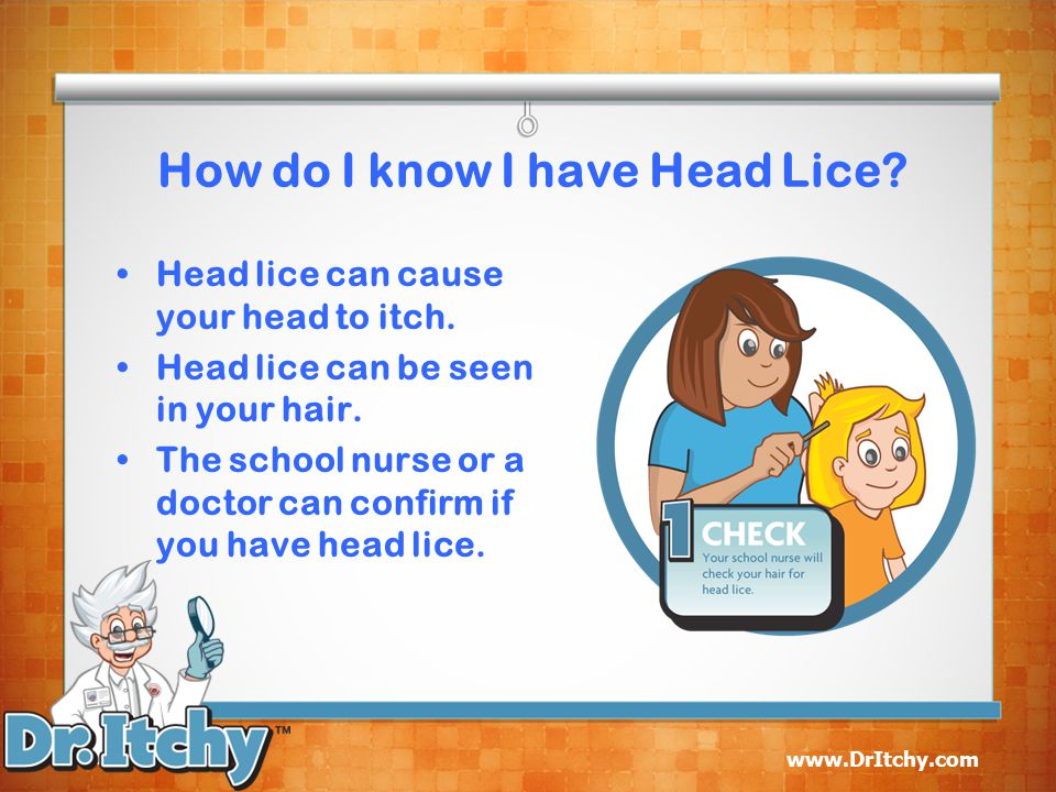 How do I know I have Head Lice