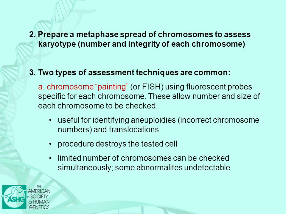 2. Prepare a metaphase spread of chromosomes to assess karyotype (number and integrity of each chromosome)