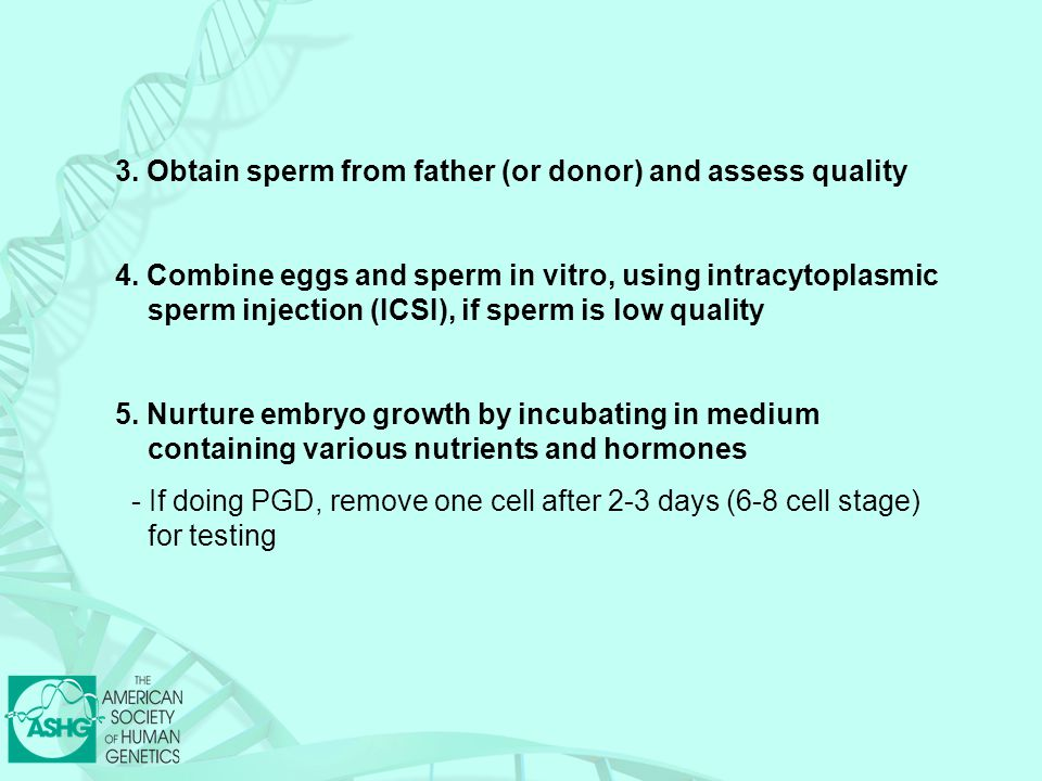 3. Obtain sperm from father (or donor) and assess quality