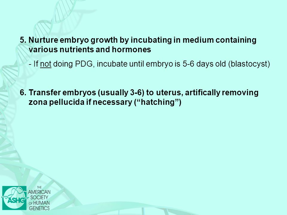5. Nurture embryo growth by incubating in medium containing various nutrients and hormones