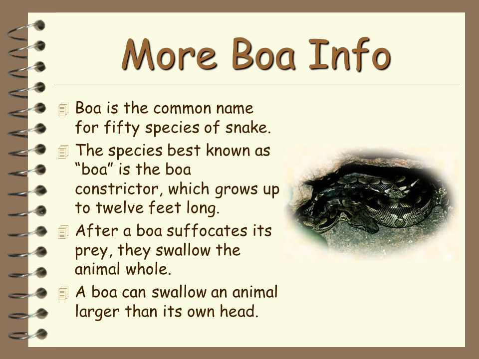 More Boa Info Boa is the common name for fifty species of snake.