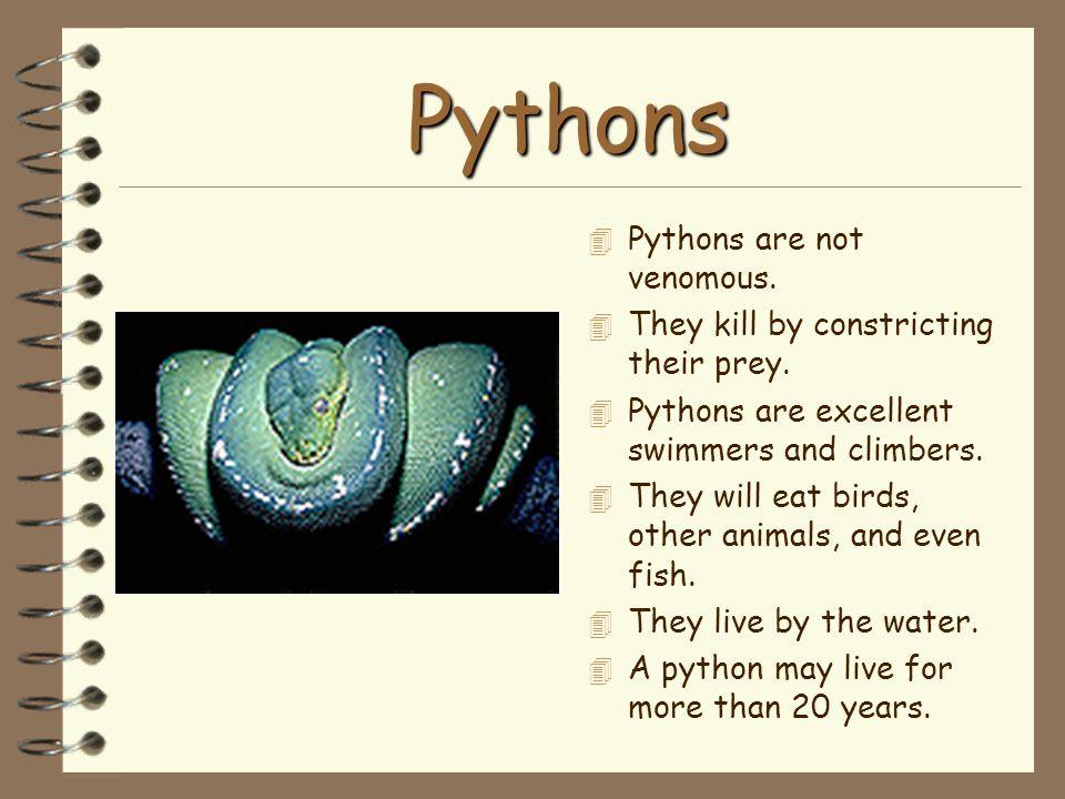 Pythons Pythons are not venomous.