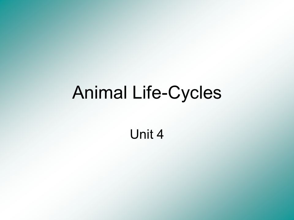 Animal Life-Cycles Unit 4