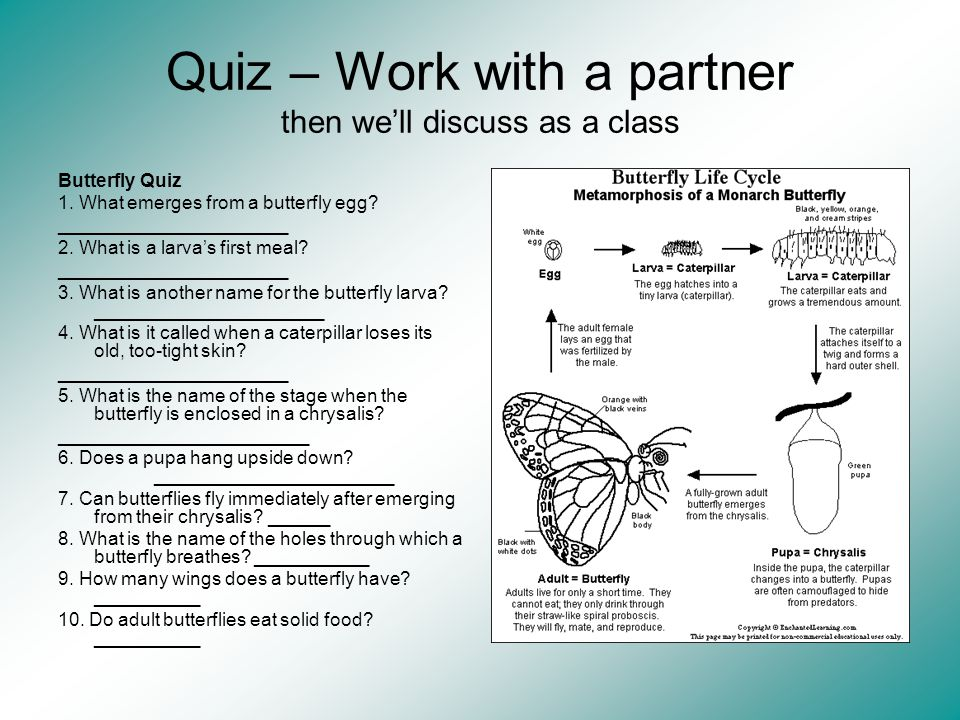 Quiz – Work with a partner then we'll discuss as a class