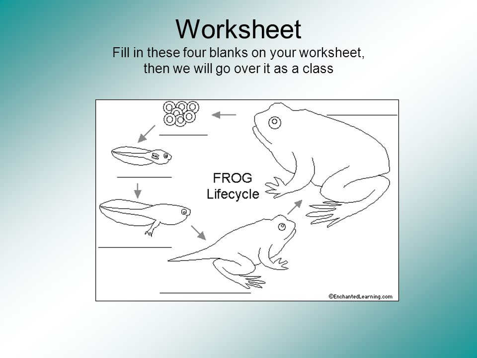 Worksheet Fill in these four blanks on your worksheet, then we will go over it as a class