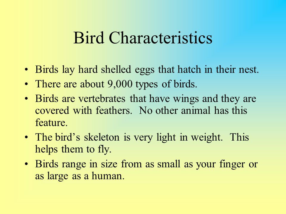 Bird Characteristics Birds lay hard shelled eggs that hatch in their nest. There are about 9,000 types of birds.