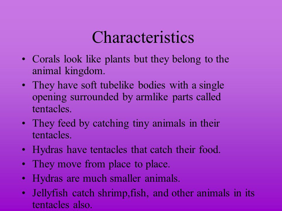 Characteristics Corals look like plants but they belong to the animal kingdom.