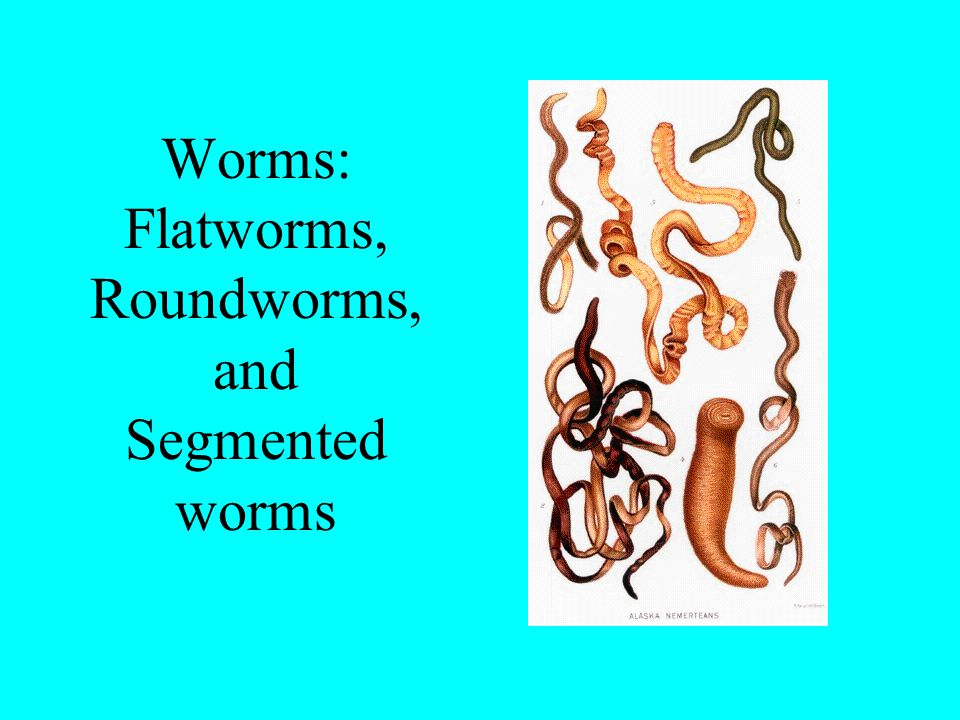 Worms: Flatworms, Roundworms, and Segmented worms