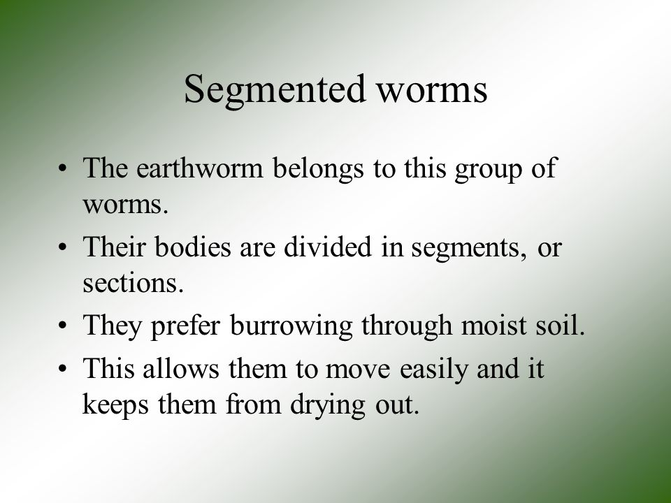 Segmented worms The earthworm belongs to this group of worms.