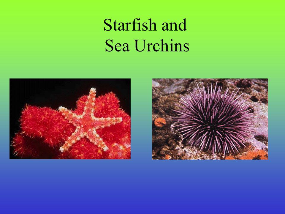 Starfish and Sea Urchins