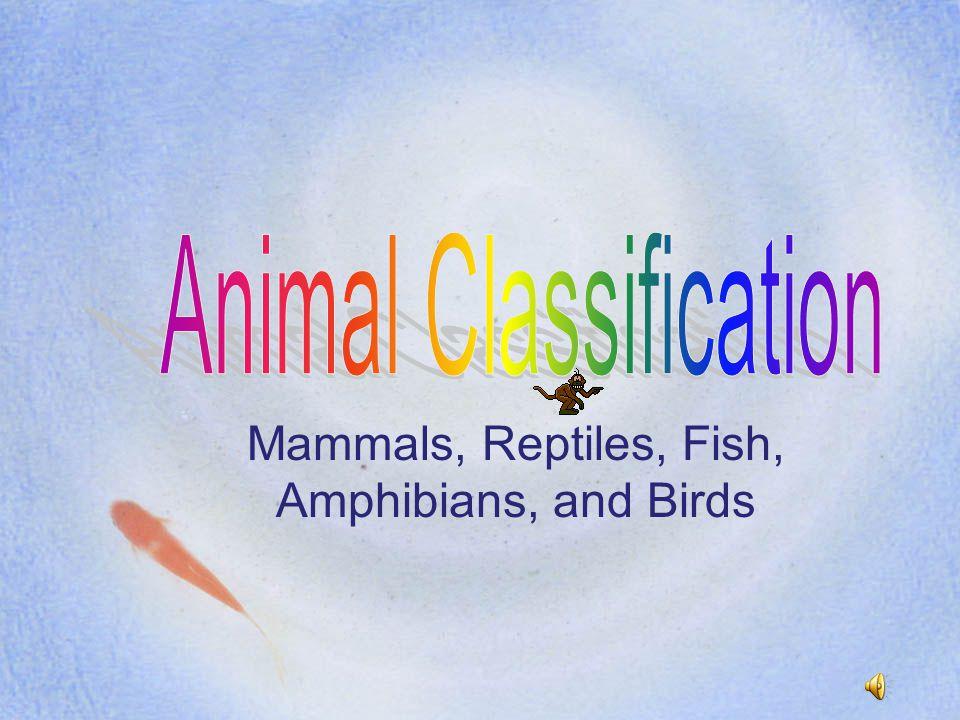 Mammals, Reptiles, Fish, Amphibians, and Birds
