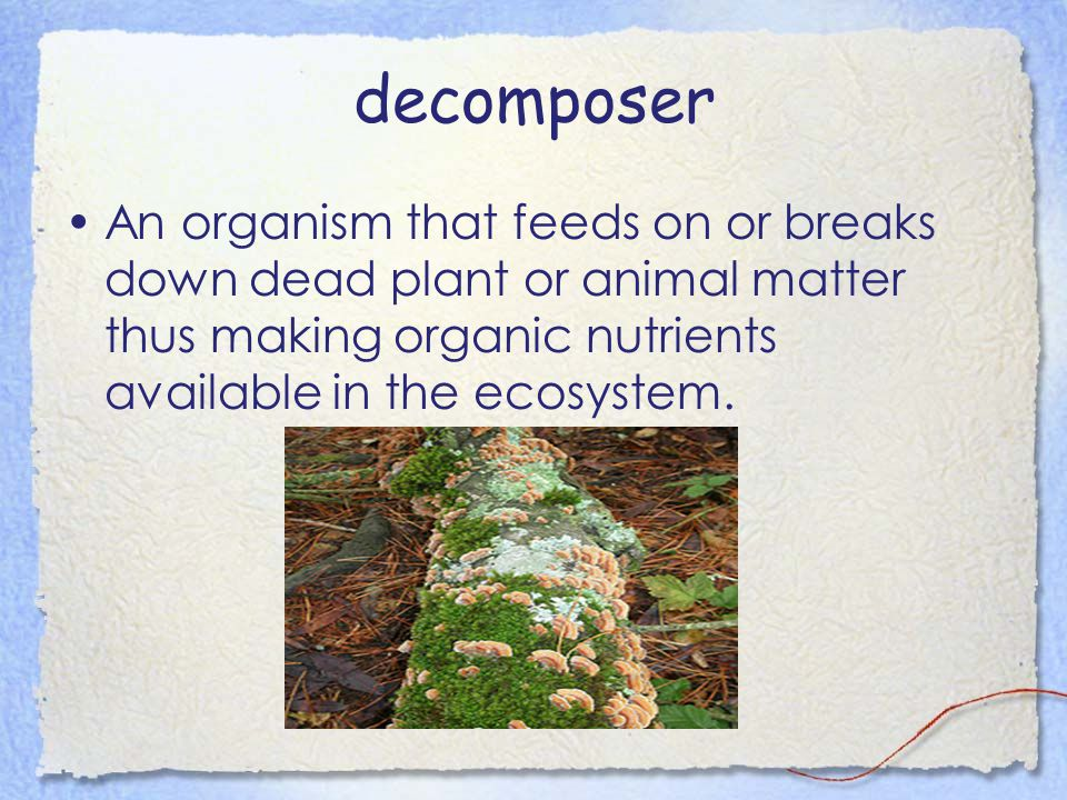 decomposer An organism that feeds on or breaks down dead plant or animal matter thus making organic nutrients available in the ecosystem.