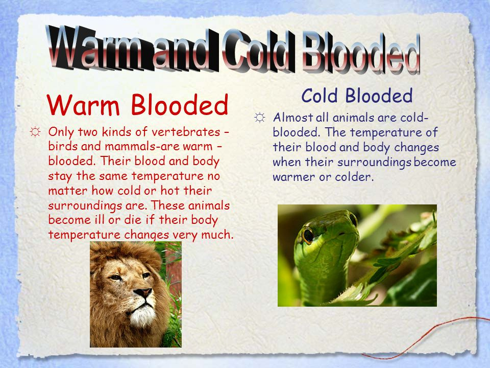 Warm- and Cold-Blooded Animals
