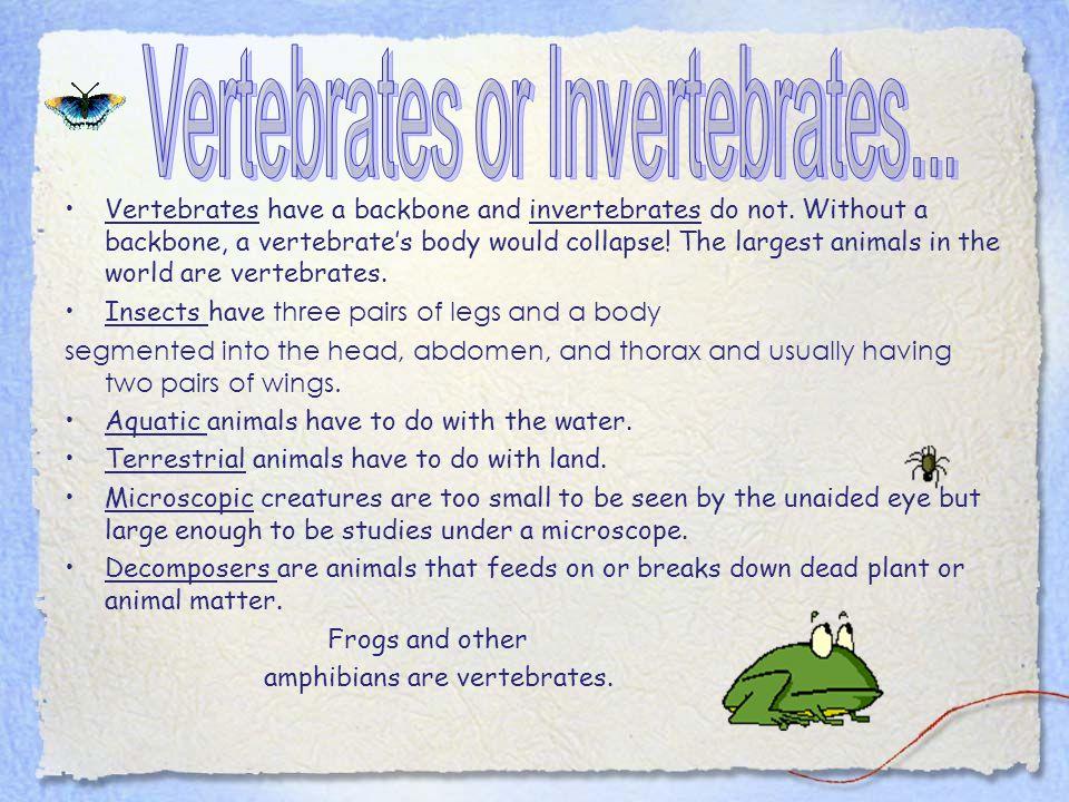 Vertebrates or Invertebrates...