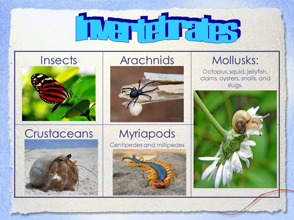 Invertebrates Insects Arachnids Mollusks: Crustaceans Myriapods