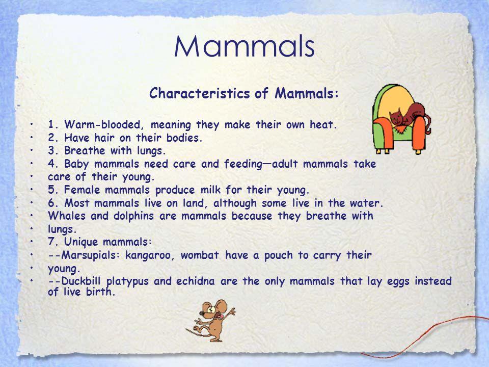 Characteristics of Mammals: