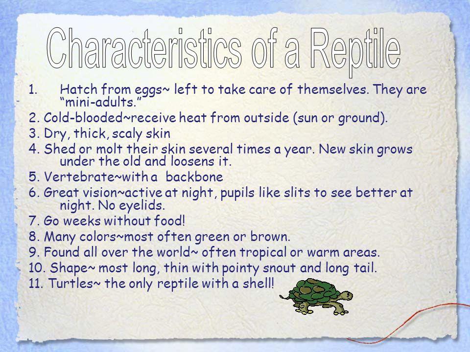 Characteristics of a Reptile