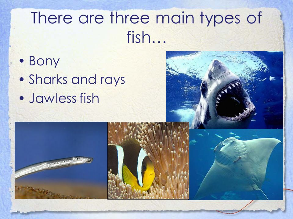 There are three main types of fish…
