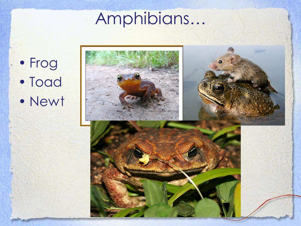 Amphibians… Frog Toad Newt