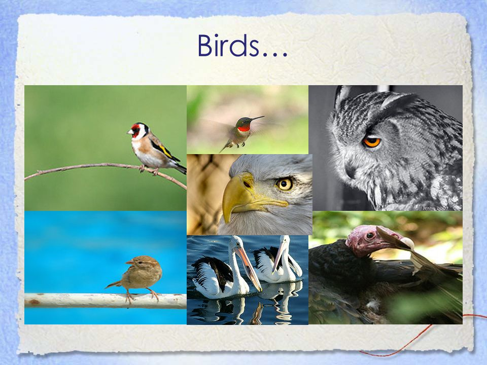 Birds…