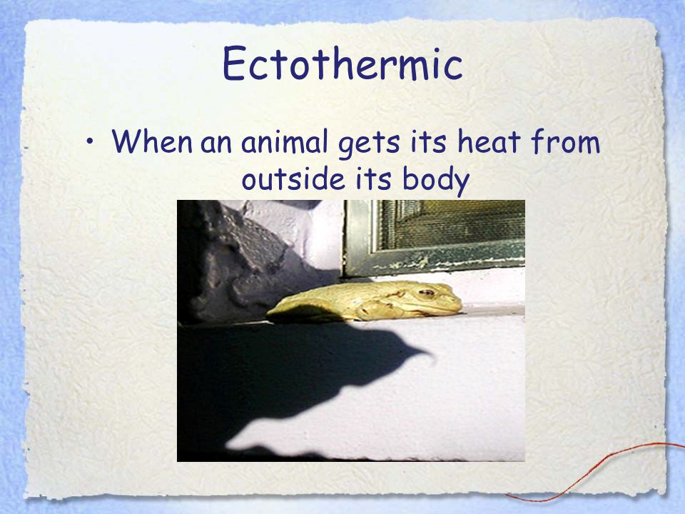 When an animal gets its heat from outside its body