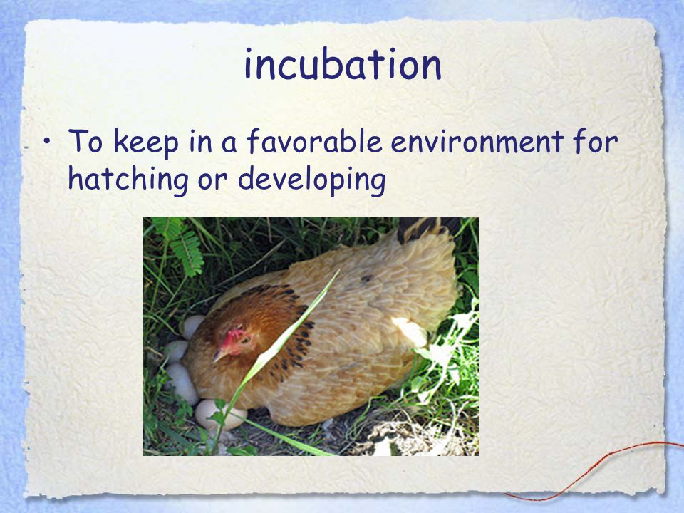 incubation To keep in a favorable environment for hatching or developing