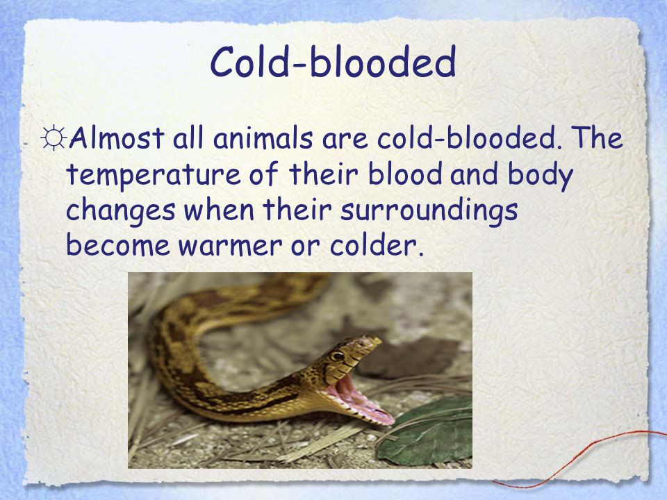 Cold-blooded Almost all animals are cold-blooded.
