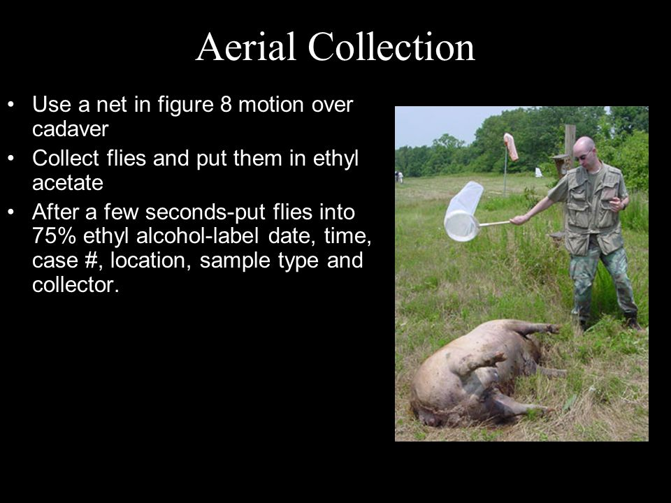 Aerial Collection Use a net in figure 8 motion over cadaver
