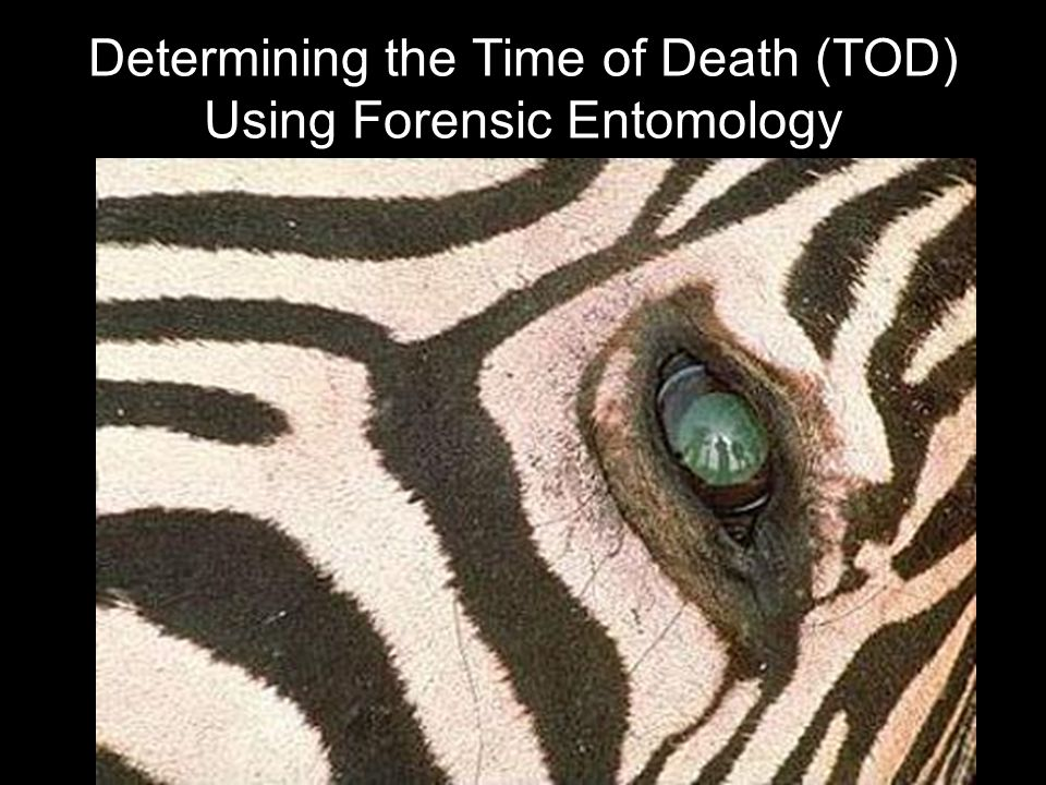 Determining the Time of Death (TOD) Using Forensic Entomology