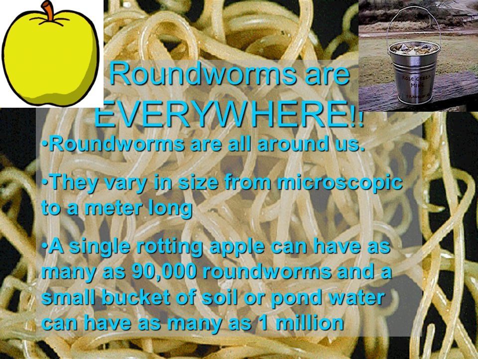 Roundworms are EVERYWHERE!!