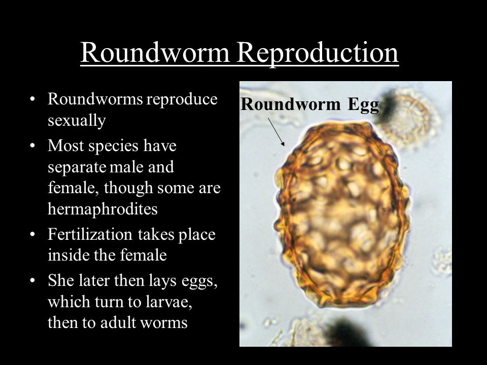 Roundworm Reproduction