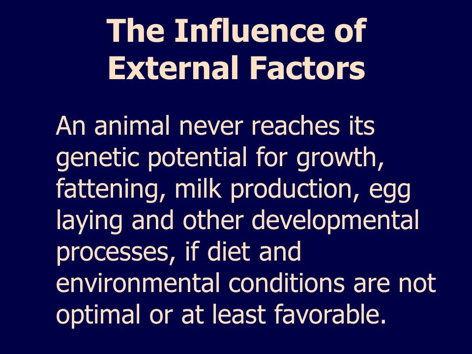 The Influence of External Factors
