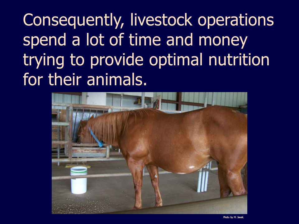 Consequently, livestock operations spend a lot of time and money trying to provide optimal nutrition for their animals.