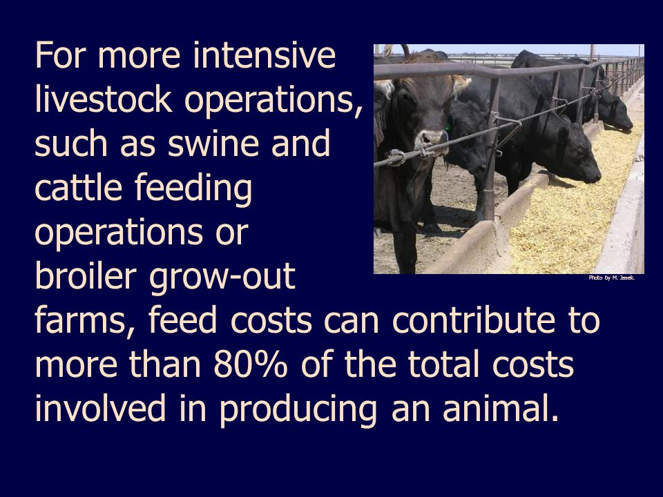 For more intensive livestock operations, such as swine and cattle feeding operations or broiler grow-out farms, feed costs can contribute to more than 80% of the total costs involved in producing an animal.