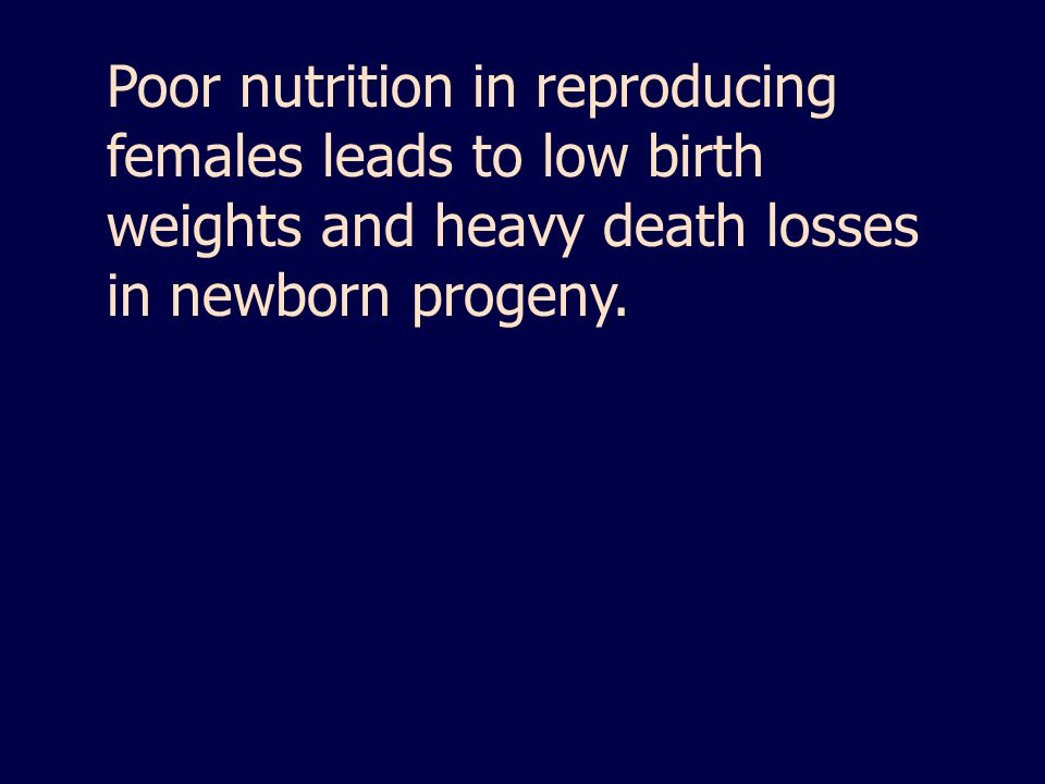 Poor nutrition in reproducing females leads to low birth weights and heavy death losses in newborn progeny.