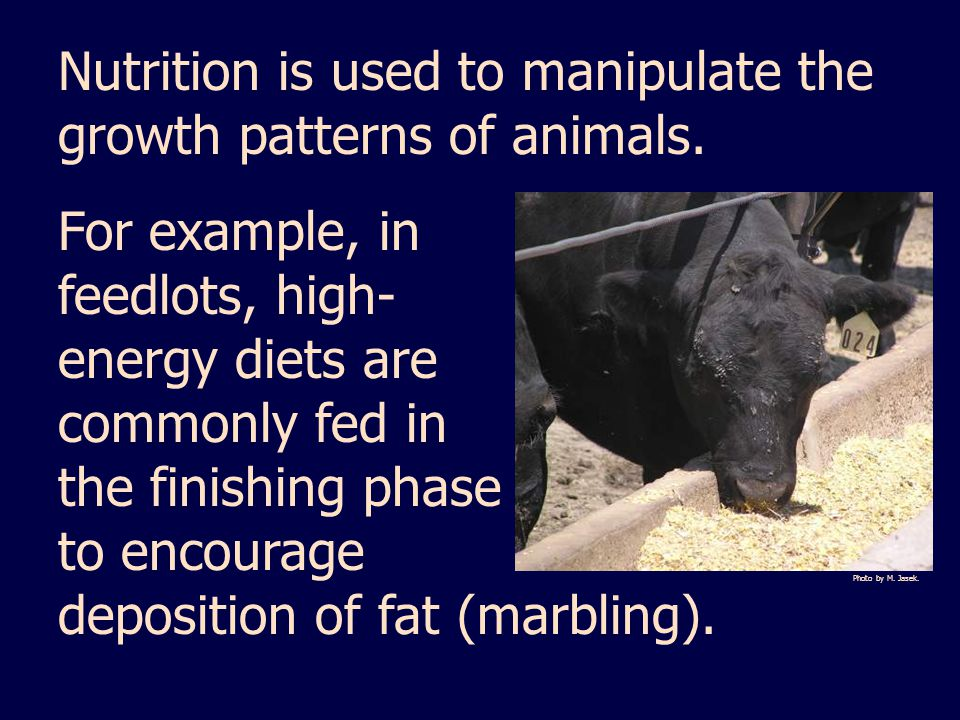 Nutrition is used to manipulate the growth patterns of animals.